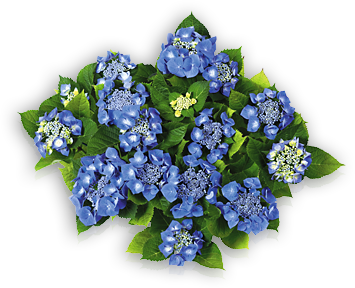 hort-blue-blaumeise