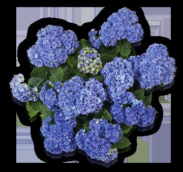 you-together-blue