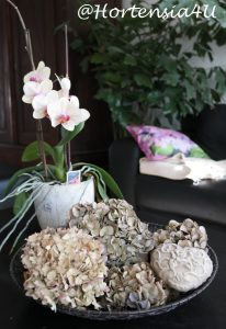Hervorragend Hortensienblüten trocknen - so geht es einfach und schnellHortensia YP95
