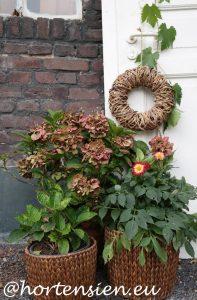 Hortensien Archive - Hortensiahortensia Gartnern Im Herbst Den Garten Fur Die Wintertagen Vorbereiten