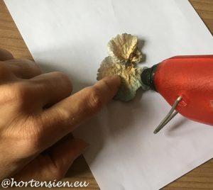 hortensienlicht4