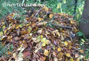 hortensien_pellens_blog_igelburg7