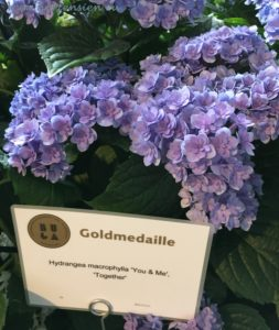 Together You&Me Hortensie Goldmedaille