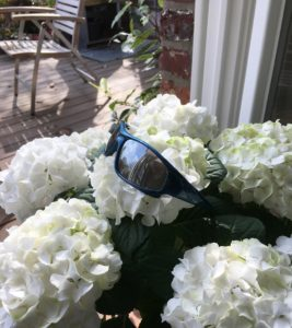 Hortensie mit Sonnenbrille